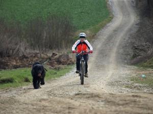 Bikejöring
