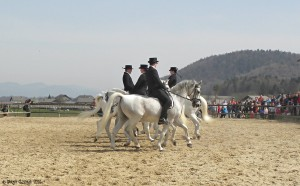 Pferde-Vorfuehrung