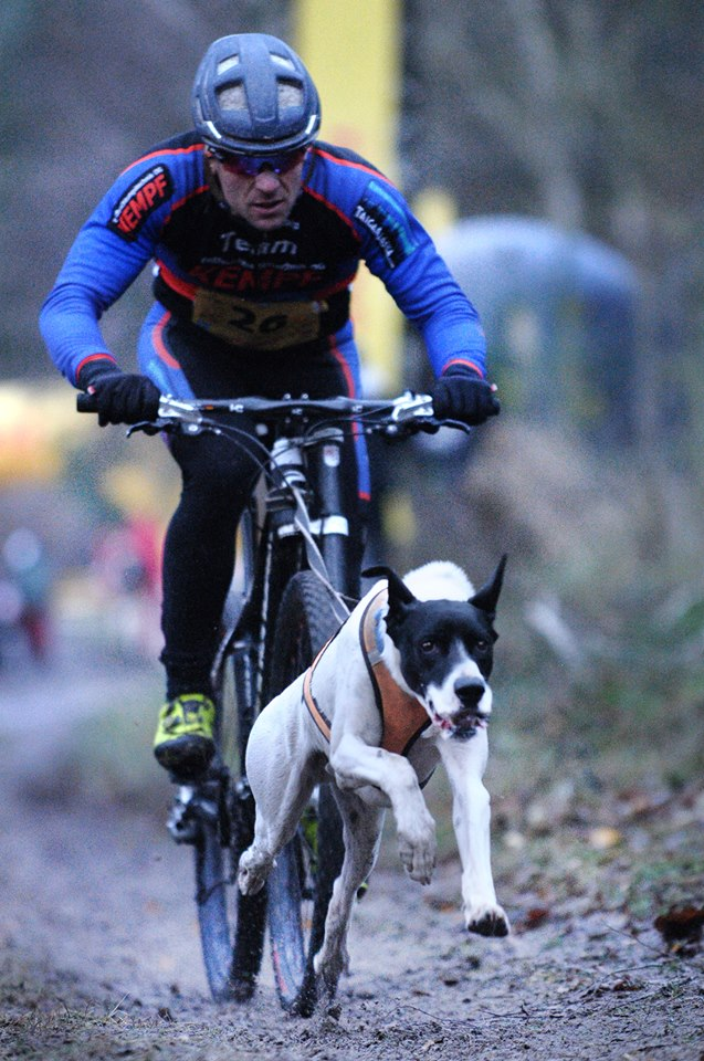 Laufhundesport Austria running dogs are always happy!